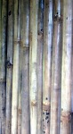 Poles in bamboo
