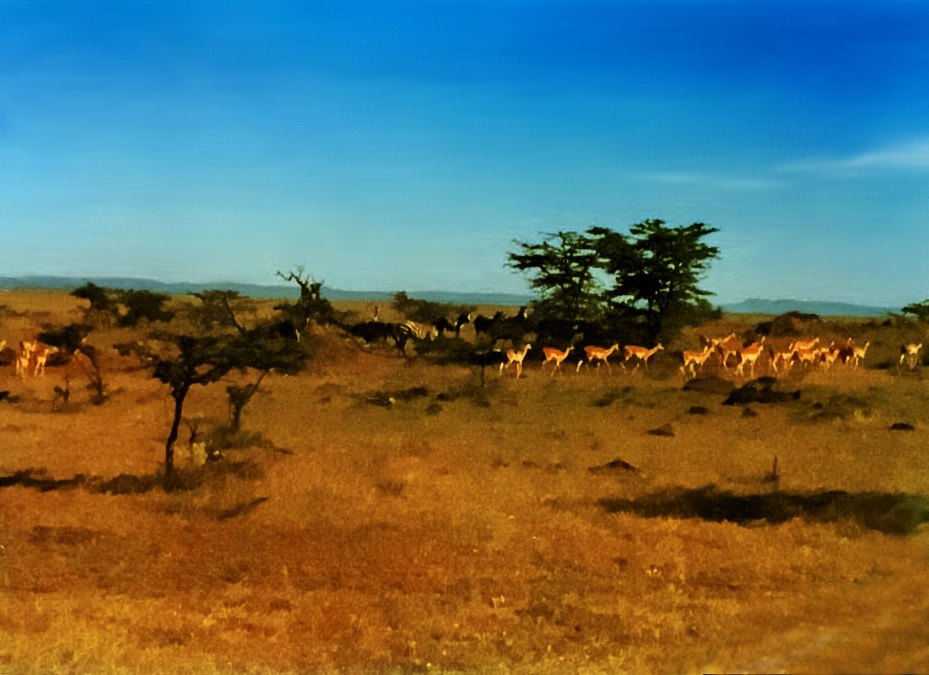 173_tonemapped How I recalled my 1980 safari by restoring old photos