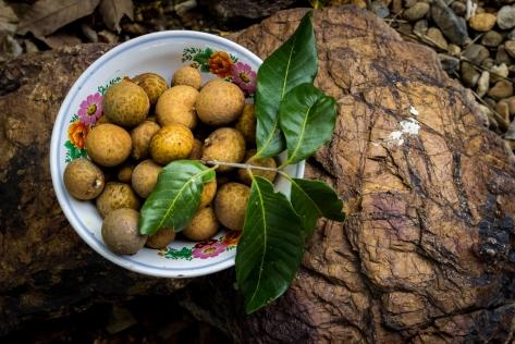 Freshly picked Lam Yai