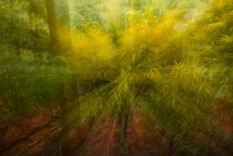 img_4286 How to liven up your photography with ICM