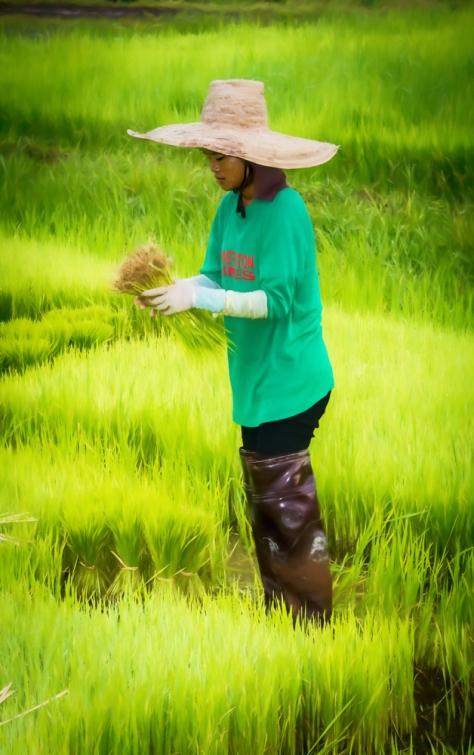 img_9530-edit Rice painting